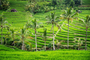WHERE TO EAT, SLEEP & PLAY IN UBUD, BALI