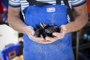 Mussel Up